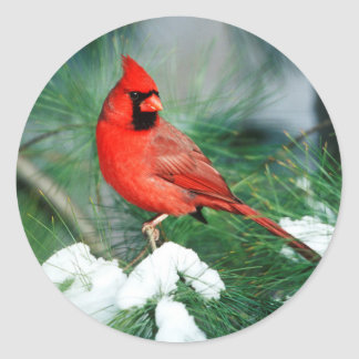 Northern Cardinal male on tree, IL Classic Round Sticker