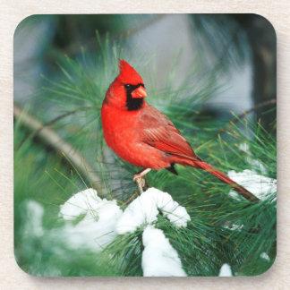 Northern Cardinal male on tree, IL Coasters