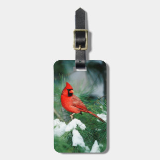 Northern Cardinal male on tree, IL Luggage Tag