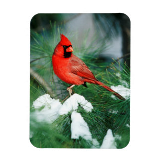 Northern Cardinal male on tree, IL Magnet