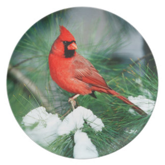 Northern Cardinal male on tree, IL Plate