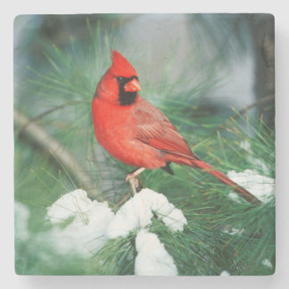 Northern Cardinal male on tree, IL Stone Beverage Coaster