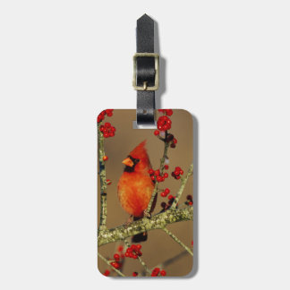 Northern Cardinal male perched, IL Bag Tag