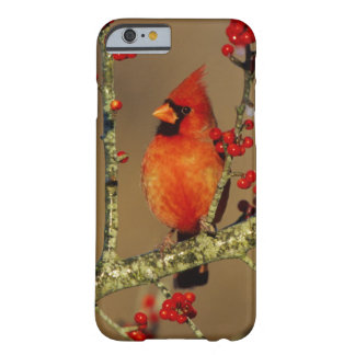 Northern Cardinal male perched, IL Barely There iPhone 6 Case