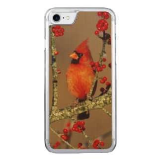 Northern Cardinal male perched, IL Carved iPhone 7 Case