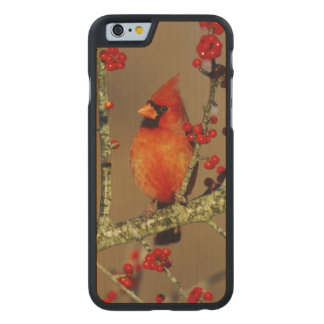 Northern Cardinal male perched, IL Carved Maple iPhone 6 Case