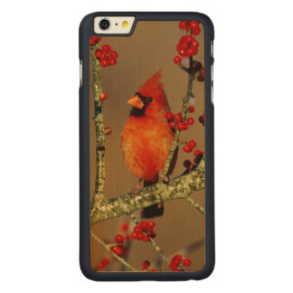 Northern Cardinal male perched, IL Carved® Maple iPhone 6 Plus Case