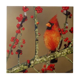 Northern Cardinal male perched, IL Ceramic Tile