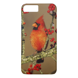 Northern Cardinal male perched, IL iPhone 7 Plus Case