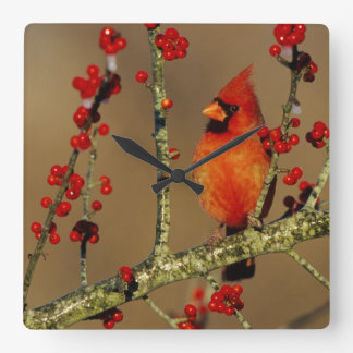 Northern Cardinal male perched, IL Square Wall Clock