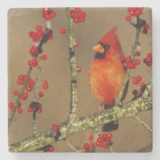 Northern Cardinal male perched, IL Stone Coaster