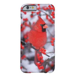 Northern Cardinal male, Winter, IL Barely There iPhone 6 Case