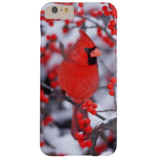 Northern Cardinal male, Winter, IL Barely There iPhone 6 Plus Case