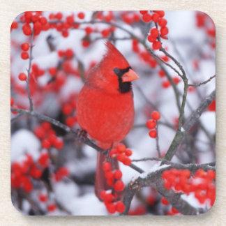 Northern Cardinal male, Winter, IL Beverage Coaster