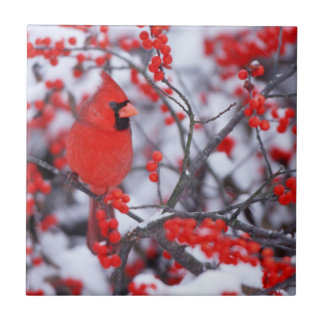 Northern Cardinal male, Winter, IL Ceramic Tile