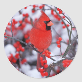 Northern Cardinal male, Winter, IL Classic Round Sticker