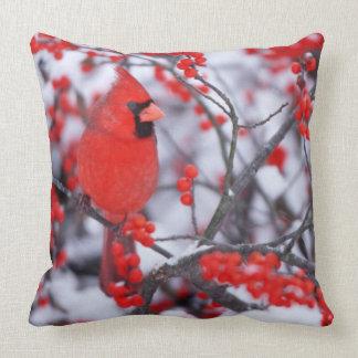 Northern Cardinal male, Winter, IL Cushion