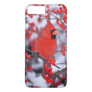 Northern Cardinal male, Winter, IL iPhone 7 Plus Case