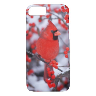 Northern Cardinal male, Winter, IL iPhone 8/7 Case