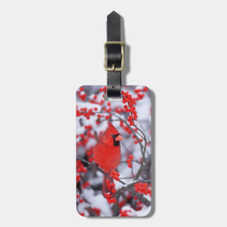 Northern Cardinal male, Winter, IL Luggage Tag