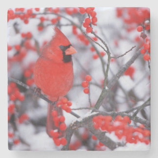 Northern Cardinal male, Winter, IL Stone Beverage Coaster