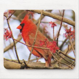 Northern Cardinal Mousepad