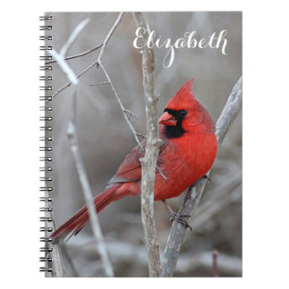 Northern Cardinal Notebook