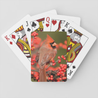 Northern Cardinal on Common Winterberry Playing Cards