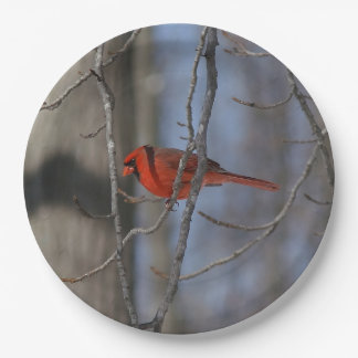 Northern Cardinal, Paper Plate. Paper Plate