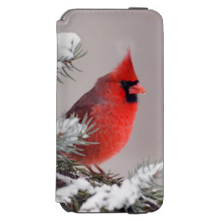 Northern Cardinal Perched In A Tree Incipio Watson™ iPhone 6 Wallet Case