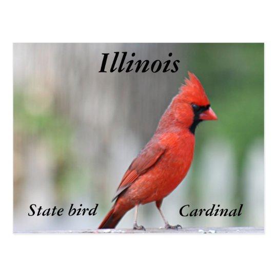 Northern Cardinal photo Postcard