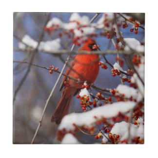 Northern Cardinal Tile
