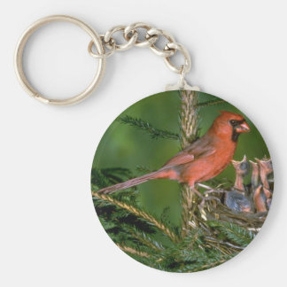 Northern Cardinal with young Key Ring