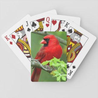 Northern cardinals playing cards