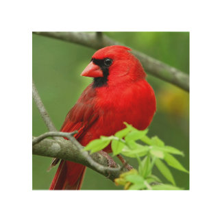 Northern cardinals wood print