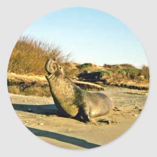 Northern Elephant Seal, Adult Male Round Sticker