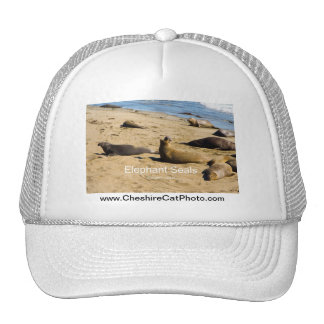 Northern Elephant Seal California Products Mesh Hats