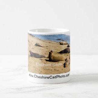 Northern Elephant Seal California Products Coffee Mugs