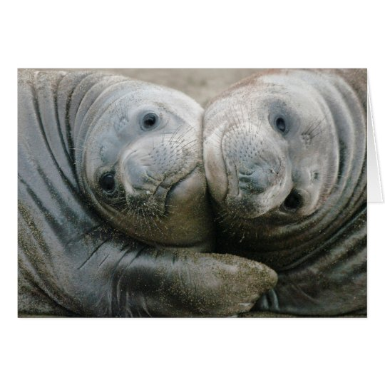 Northern Elephant Seal Pups Card