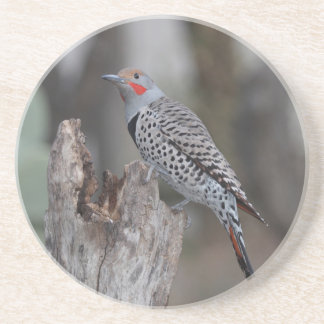 Northern Flicker Coaster