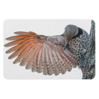 Northern Flicker Large Photo Magnet