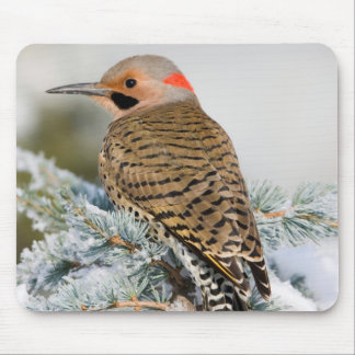 Northern Flicker male Mouse Pad
