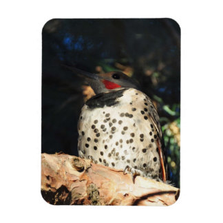 Northern Flicker - Spots Magnet
