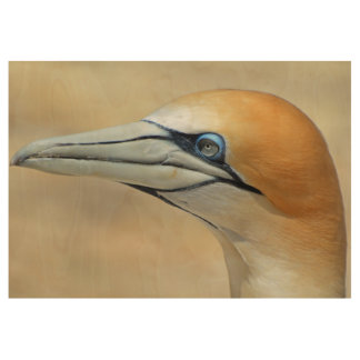Northern-gannet off the coast of New zealand Wood Poster