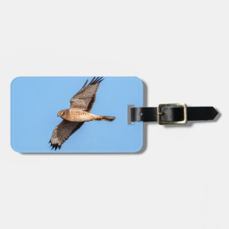 Northern Harrier in Flight Luggage Tag