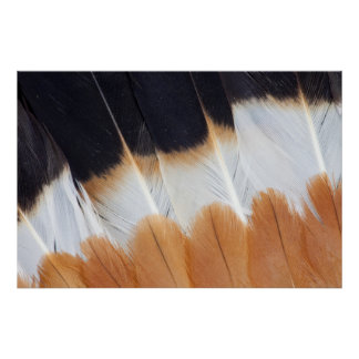 Northern Lapwing Feather Abstract Poster