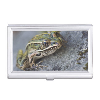 Northern Leopard frog, See-through Island, Business Card Holders