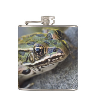 Northern Leopard frog, See-through Island, Hip Flask
