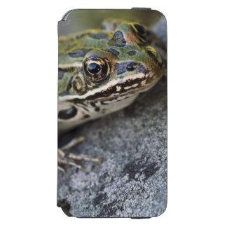 Northern Leopard frog, See-through Island, Incipio Watson™ iPhone 6 Wallet Case