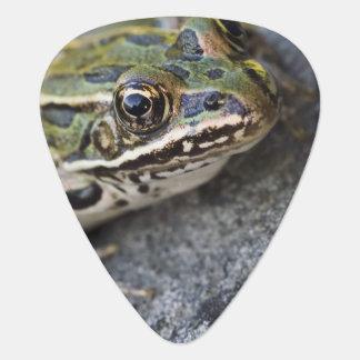 Northern Leopard frog, See-through Island, Plectrum